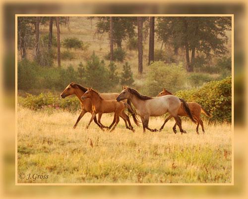 My Herd2006