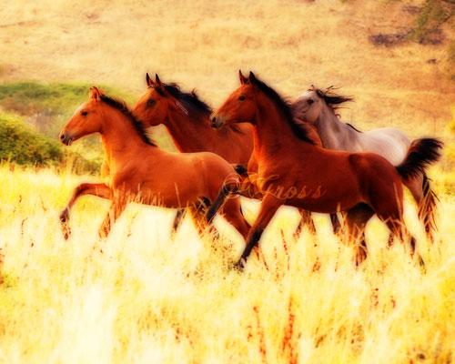 orton-foals