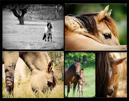 EquusCards