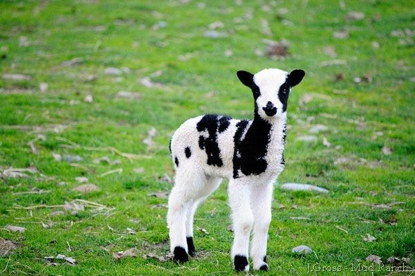 030310_Duchess'Ewe