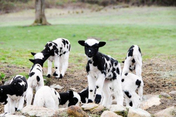 Mud Ranch's Amelia & Friends